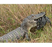 Gator At Dinnertime Photographic Print