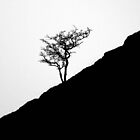 Lonely Tree by fenster