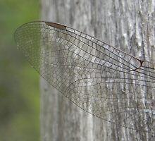 Dragonfly Wing by Martha Medford