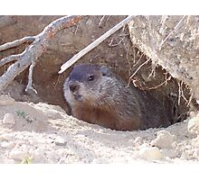 Mama Groundhog Photographic Print