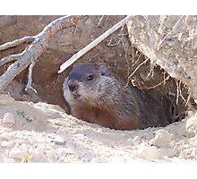 Mama Groundhog Photographic Print