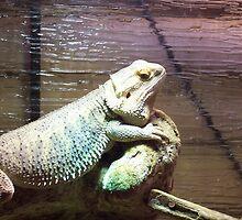 Lizard by Martha Medford