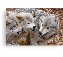 Buddy your just not getting the message!!! Canvas Print