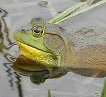 Bull Frog Reflection by Martha Medford
