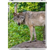 Forest Guardian 3 iPad Case/Skin