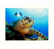 Hawk Bill Turtle Art Print