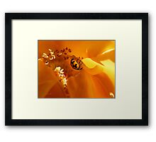 Ladybird Rose Framed Print