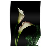 Dance of the Calla Poster