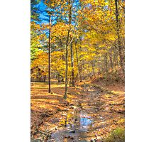 Golden Walks Photographic Print