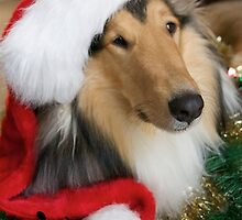 Christmas Santa Rough Collie by Jan  Wall