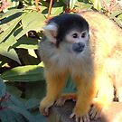 Blacktop Squirrel Monkey by whyteali