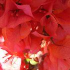 pink flowers by kveta