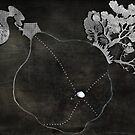 the circle by maborosi