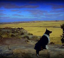 Kali at the Painted Desert by Charmiene Maxwell-batten