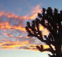 joshua tree sunset by cher