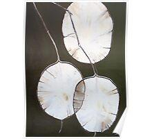 Tissue Paper Flower Poster