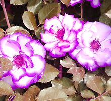 Purple Flowers by Sarah Cook