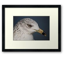 Ring Bill Seagull Close-Up Framed Print