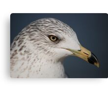 Ring Bill Seagull Close-Up Canvas Print