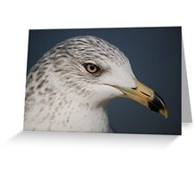 Ring Bill Seagull Close-Up Greeting Card