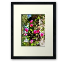 Rose Bower Framed Print