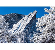 The Third Flatiron - Through The Trees Photographic Print