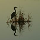 Heron by Tim Yuan