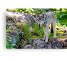 Forest Guardian 2 Canvas Print