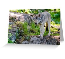 Forest Guardian 2 Greeting Card