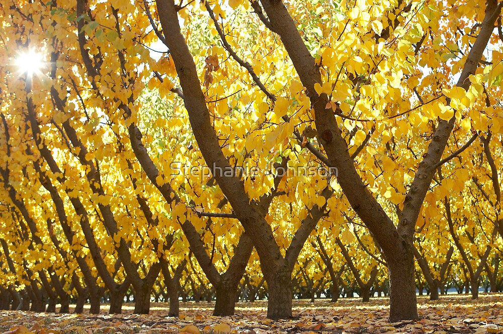 Autumn Sunburst by Stephanie Johnson