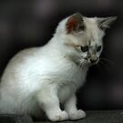Snowbell... by Qnita