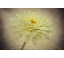 Be a star Photographic Print