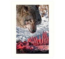 Timber Wolf with Carcass Art Print