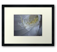 Night Blooming Sirius Framed Print
