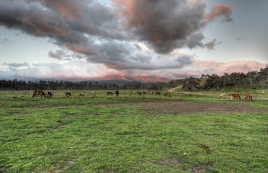 Horses paddock at sunset by Christopher Meder