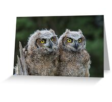 Great Horned Owl Babies Greeting Card