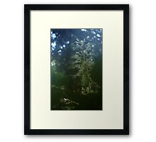 0947 - HDR Panorama - Flowers Framed Print