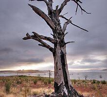 Tree at Lake Ecumbene by Christopher Meder