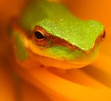 froginess by Belinda Cottee