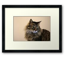 My Green Eyed Girl Framed Print