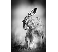 Dark Hare Photographic Print