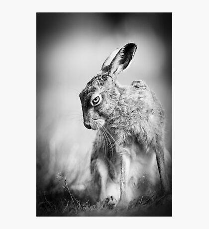Dark Hare Photographic Print