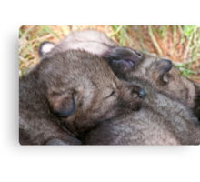 Furry Pillow Canvas Print