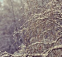 winter in branchtips by LindaMarieAnson