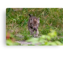 On The Move Canvas Print