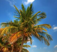 Coconut Trees by Roland Pozo