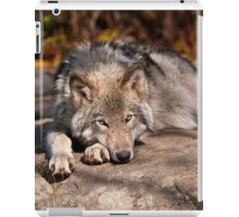 Timber Wolf At Rest iPad Case/Skin