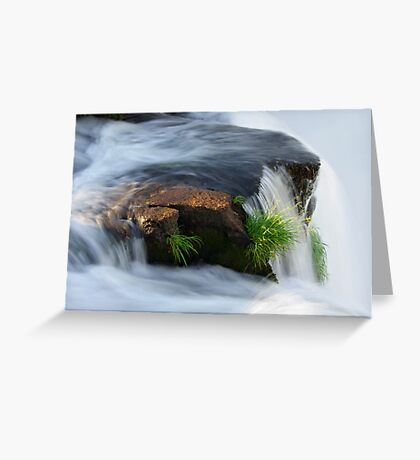 Clinging for dear life Greeting Card