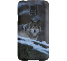 Timber Wolves In Late Evening. Samsung Galaxy Case/Skin