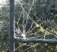 Frosted Web by AliceOK